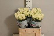 Rožės